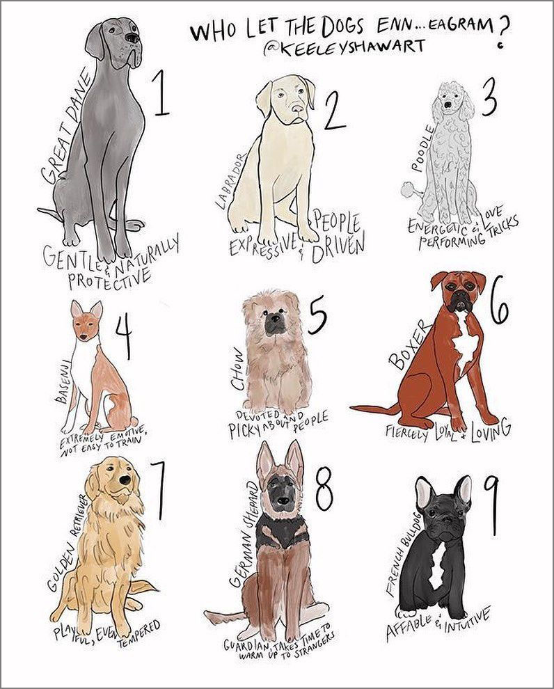dogs for your personality type