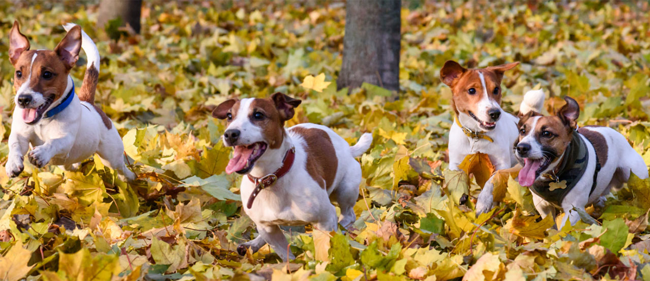 Best Dogs for Your Personality Type