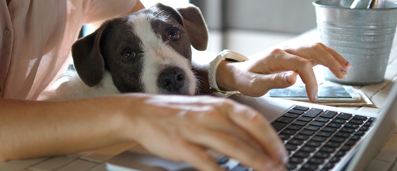Top 5 Things Our Dog Taught Us About Office Manners