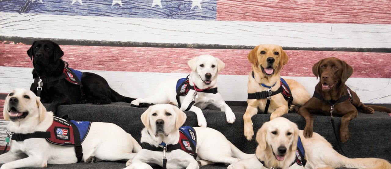 patriot paws banner